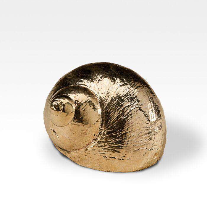 Gilded Burgus Lineate Shell
