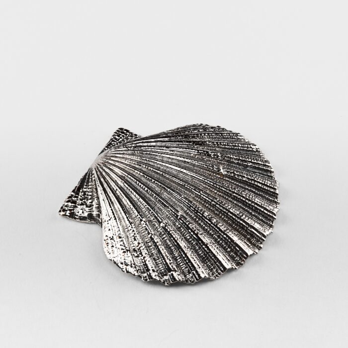 Silvered Cockle Shell