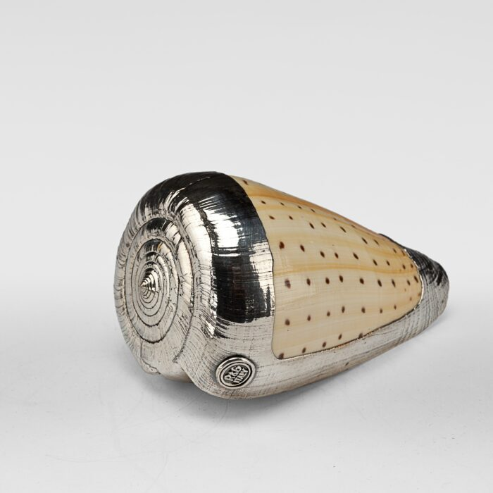 Partially Silvered Conus Butterfly Shell