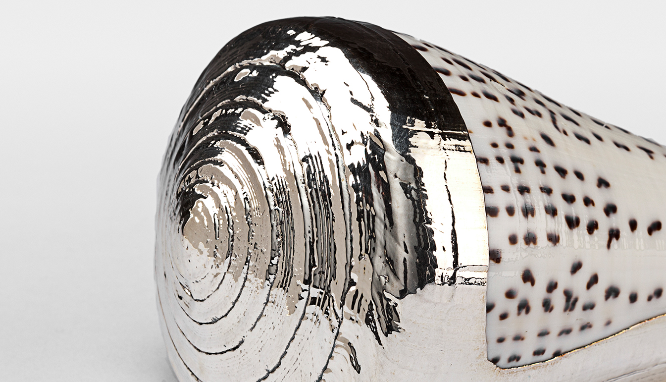 Partially Silvered Conus Leopard Shell