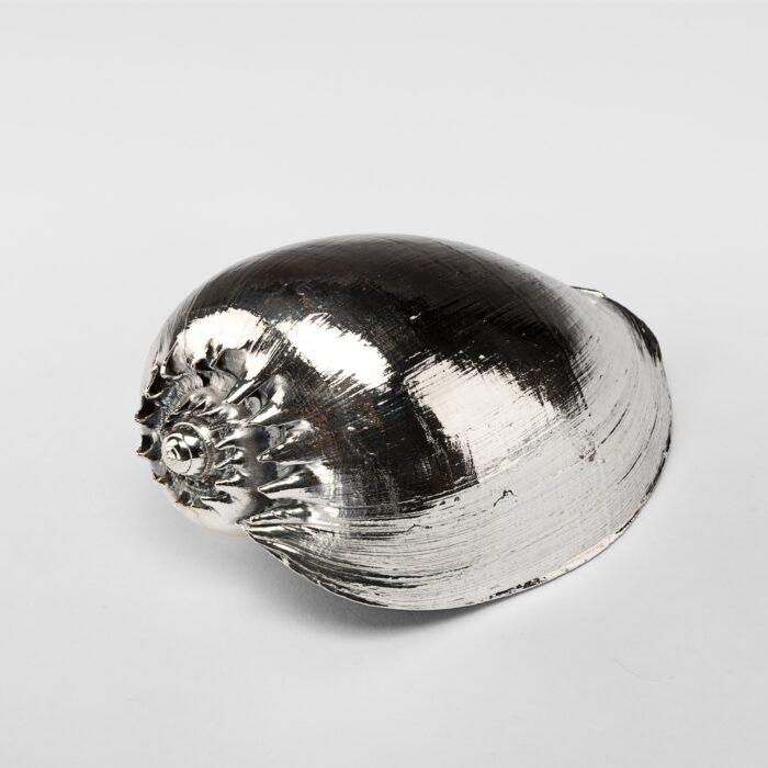 Silvered Cymbiola Shell