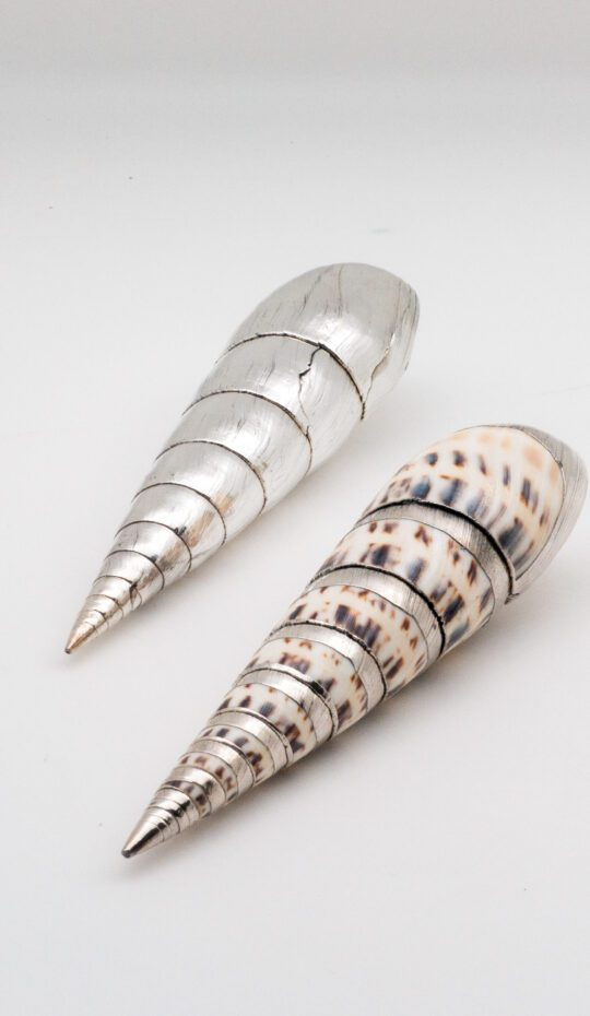 Silvered Marlinspike Shell