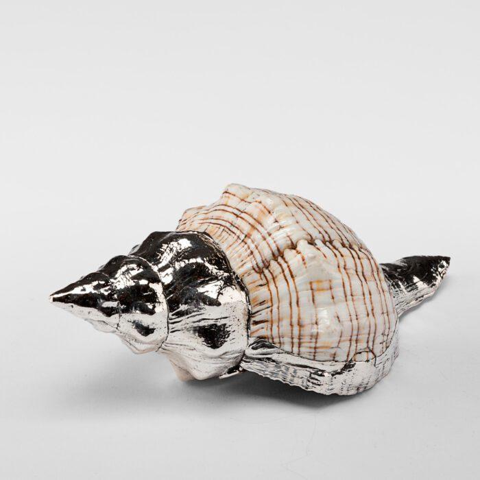 Partially Silvered Fasciolaria Shell
