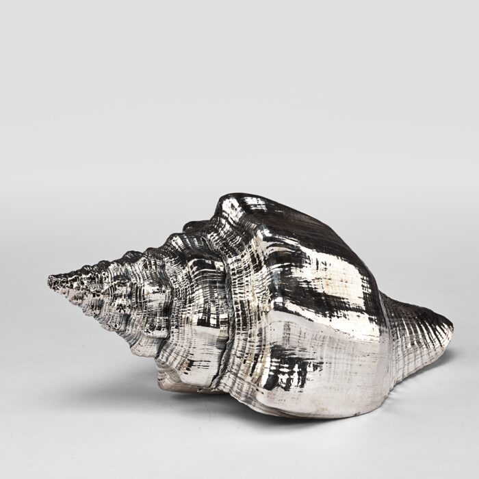 Silvered Horse Conch Shell