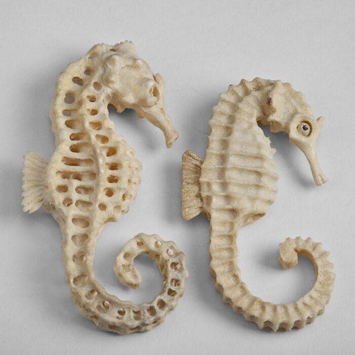 Seahorse / Skeletal Seahorse Moose Antler Carving
