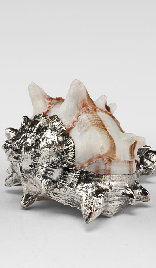 Partially Silvered Murex Braccia Shell