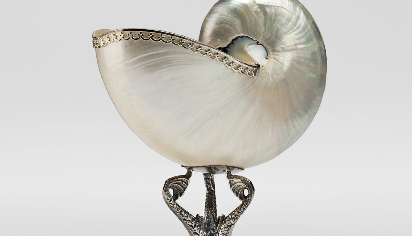 Nautilus Bernini
