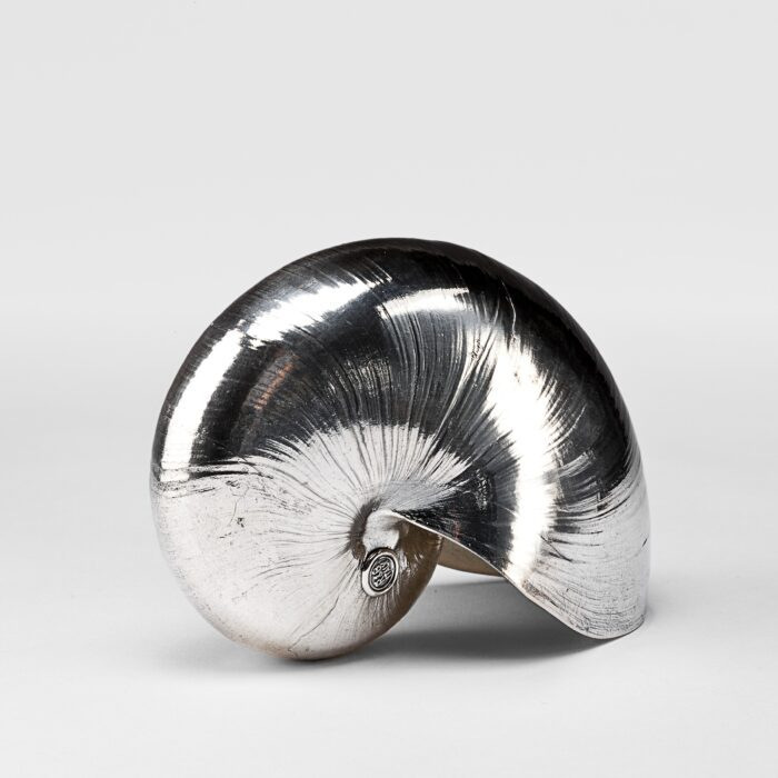 Silvered Nautilus