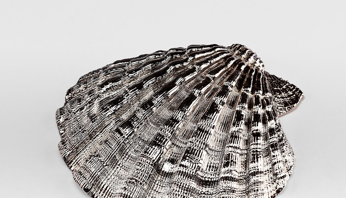Silvered Pecten Shell