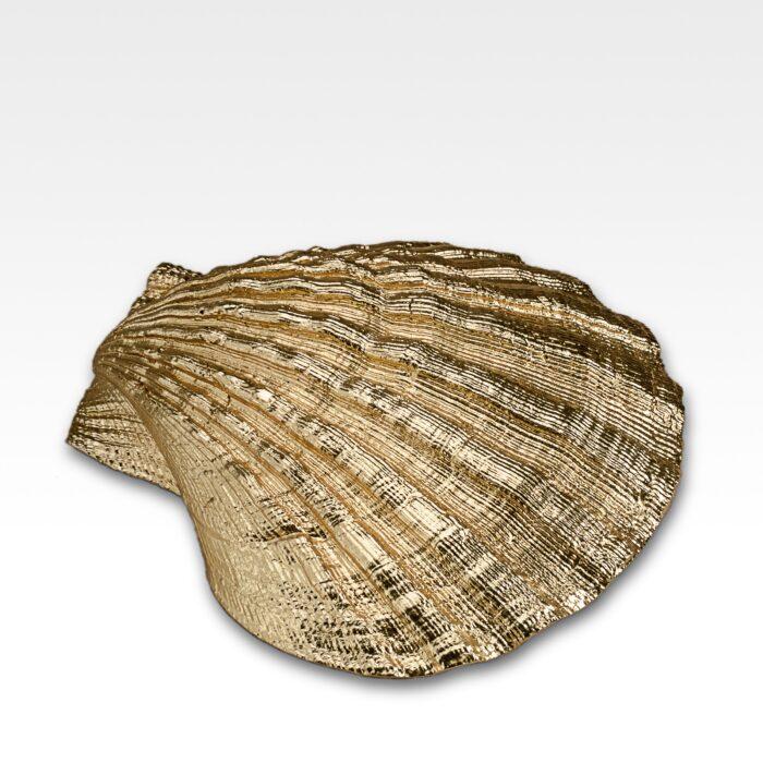 Gilded Pecten Shell