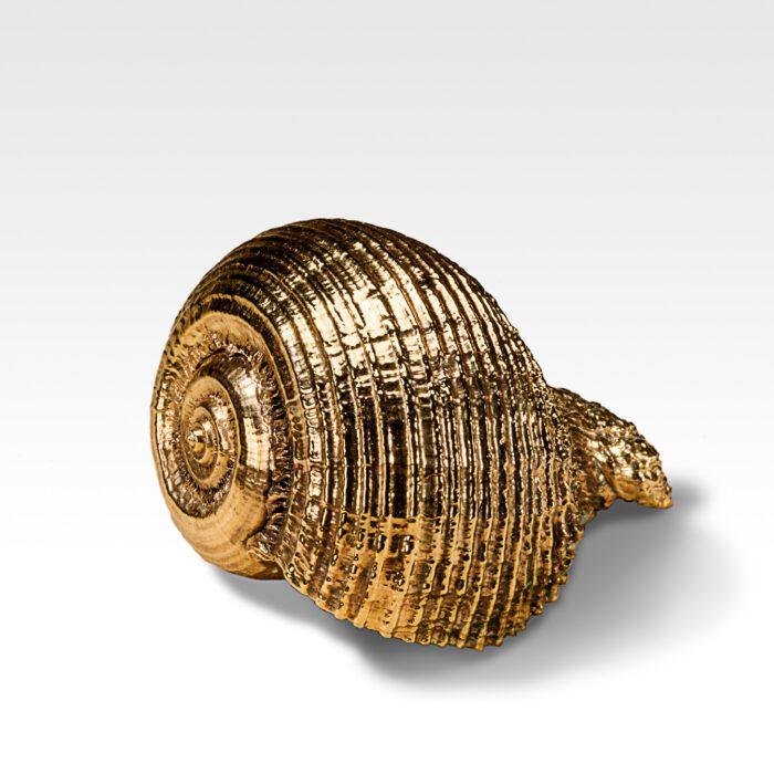 Gilded Rapa Shell