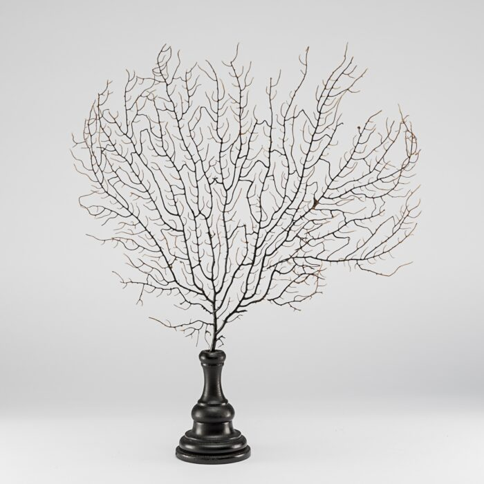 Sea Fan Small, Mounted