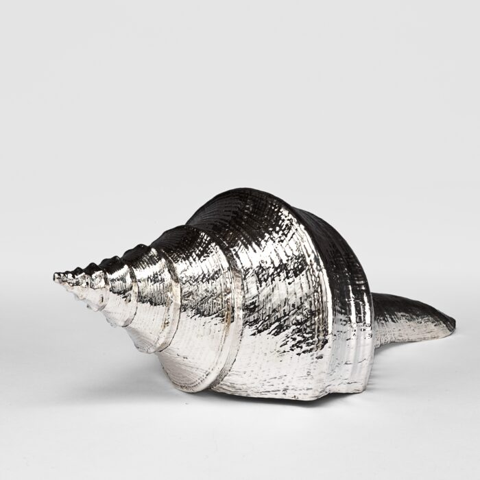 Silvered Syrinx Shell