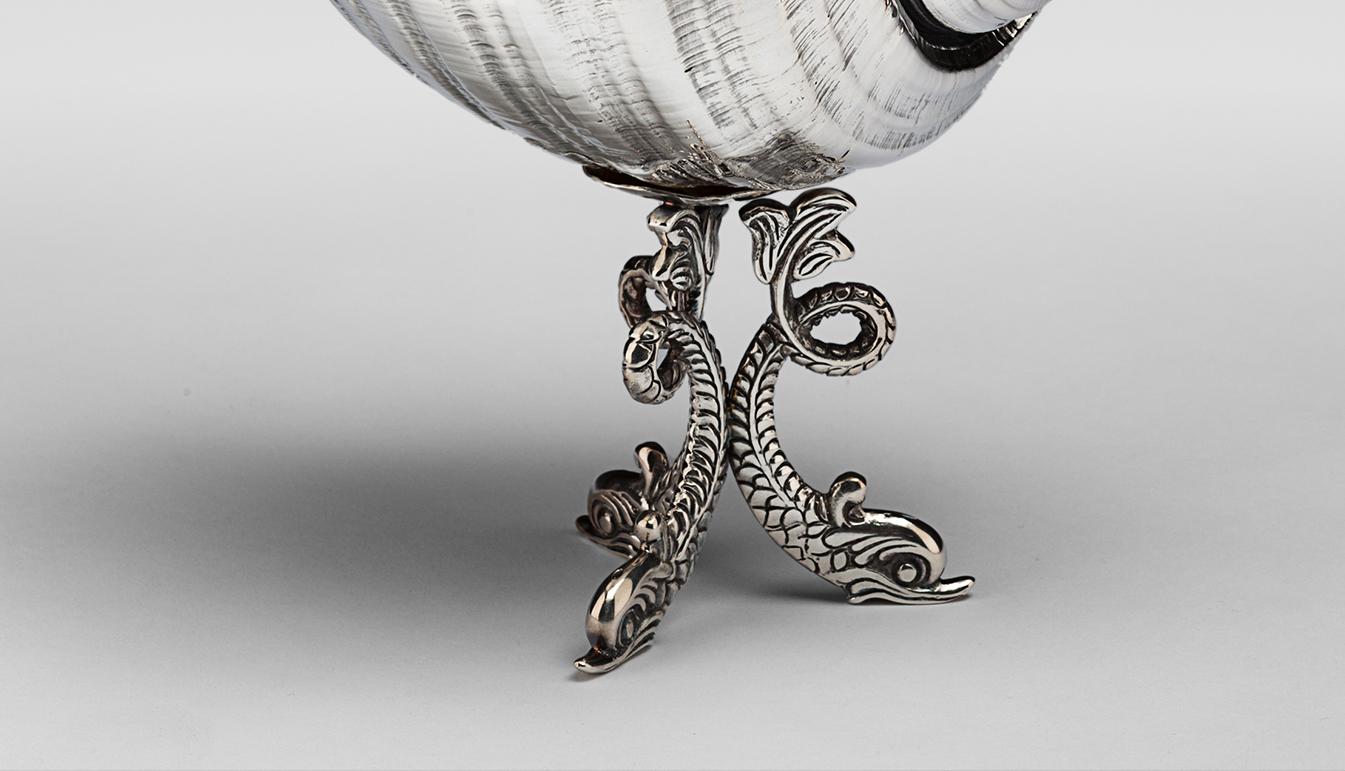 Mounted Tonna Delfini Shell