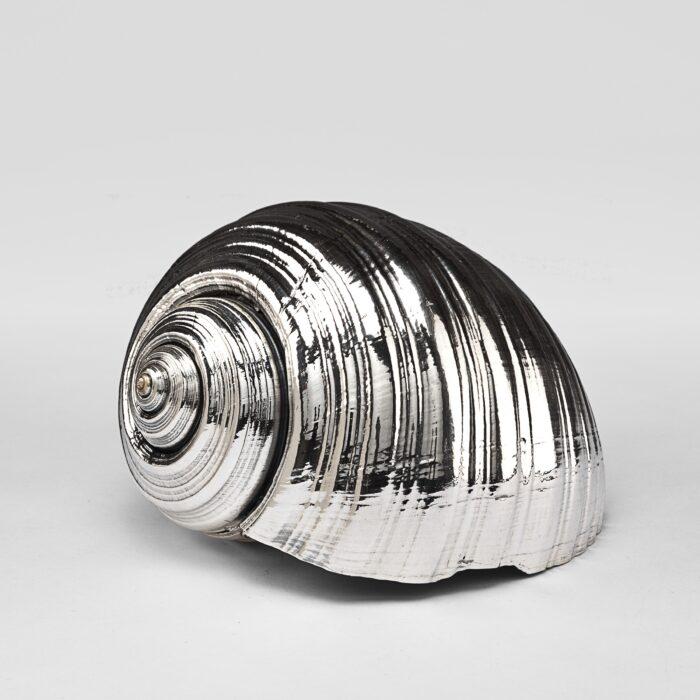 Silvered Tonna Shell