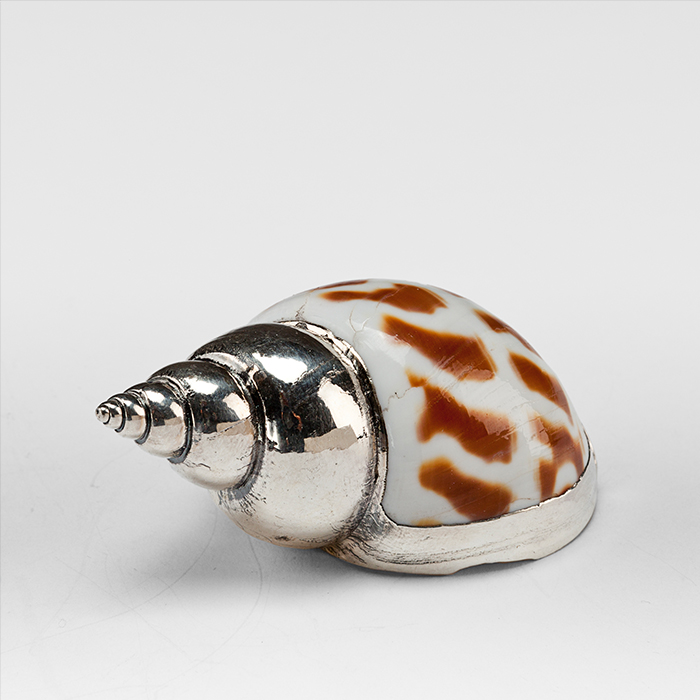 Partially Silvered Arabella Shell