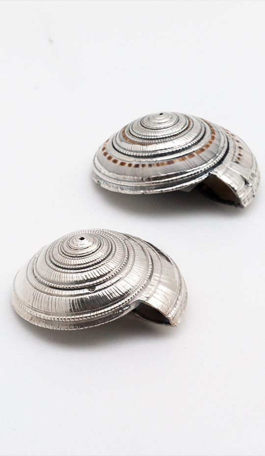 Silvered Architectonica Shell