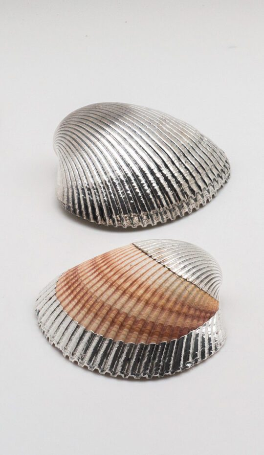 Silvered Cardium Shell