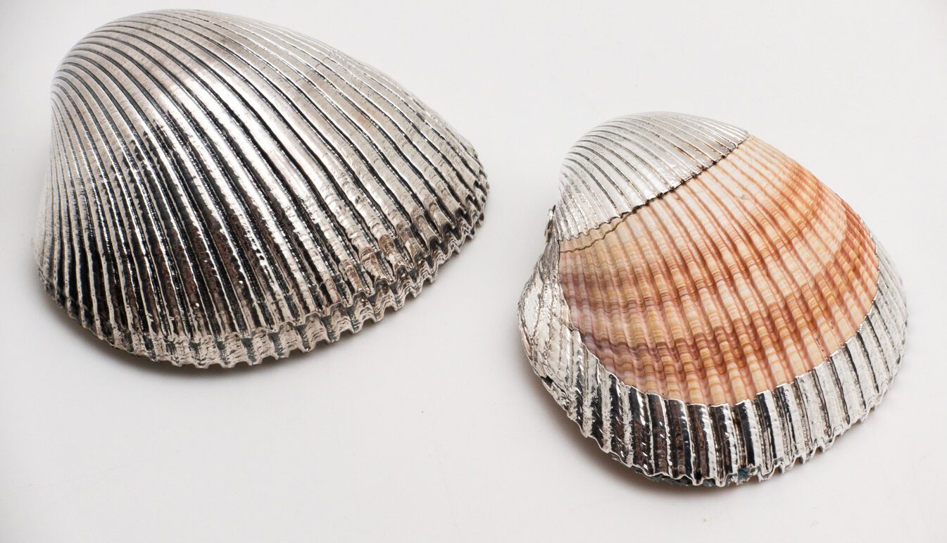 Silvered Cardium Shell
