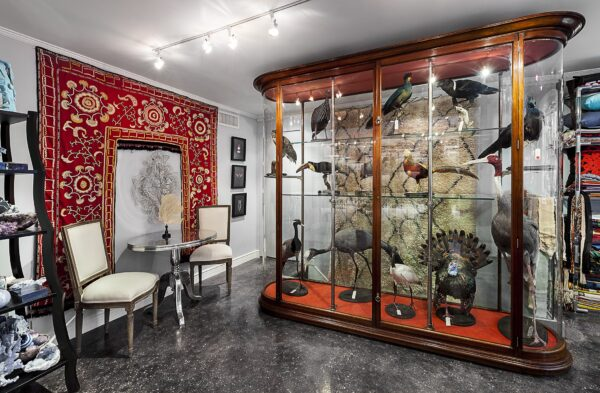 Interior of shop showing glass case with mounted taxidermy animals