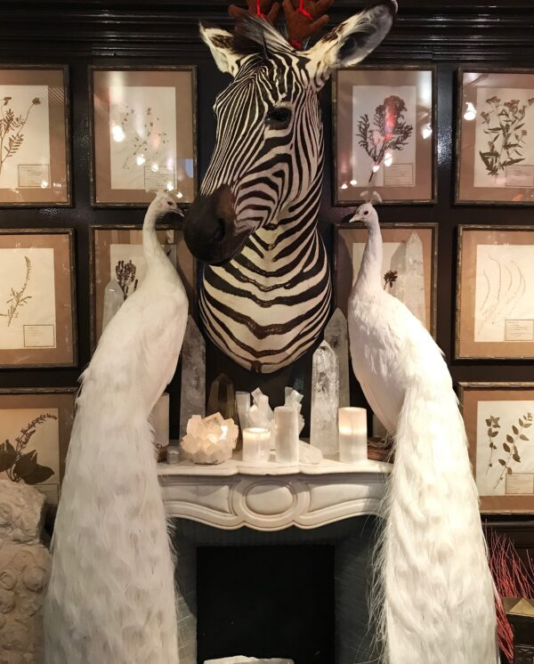 Fireplace with Zebra above, two white peacocks and white minerals sitting between.