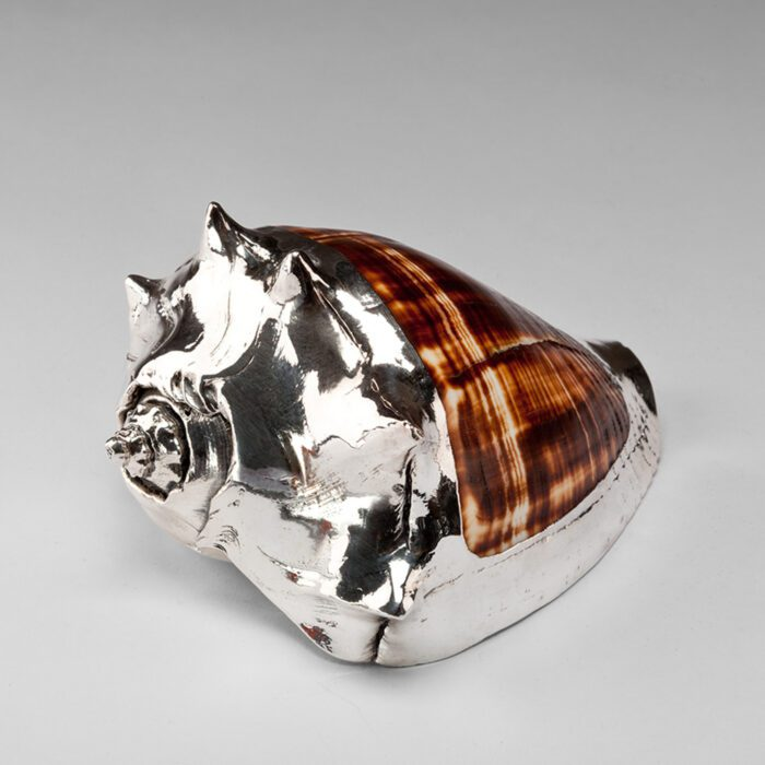 Partially Silvered Kings Crown Shell