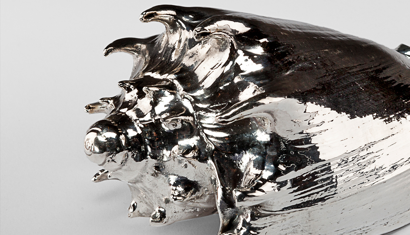 Silvered Imperialis Shell