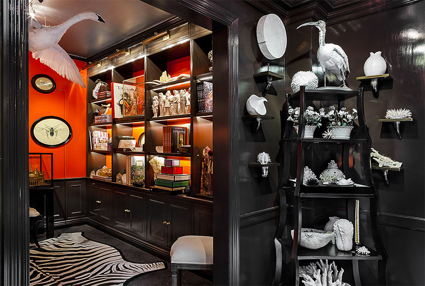 Interior of shop, showing giant flying swan, corals, zebra rug, framed spider, etc.   Creel and Gow has an extensive range of fascinating and exquisite objects sourced from all around the world.