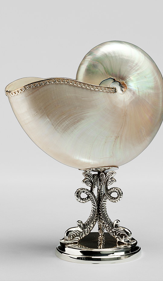 Mounted Nautilus Navona Shell