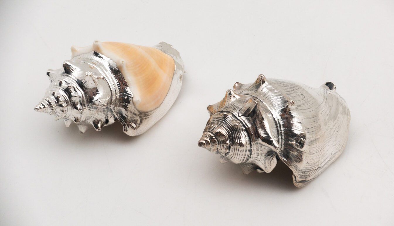 Silver Strombus Pugilis Shell