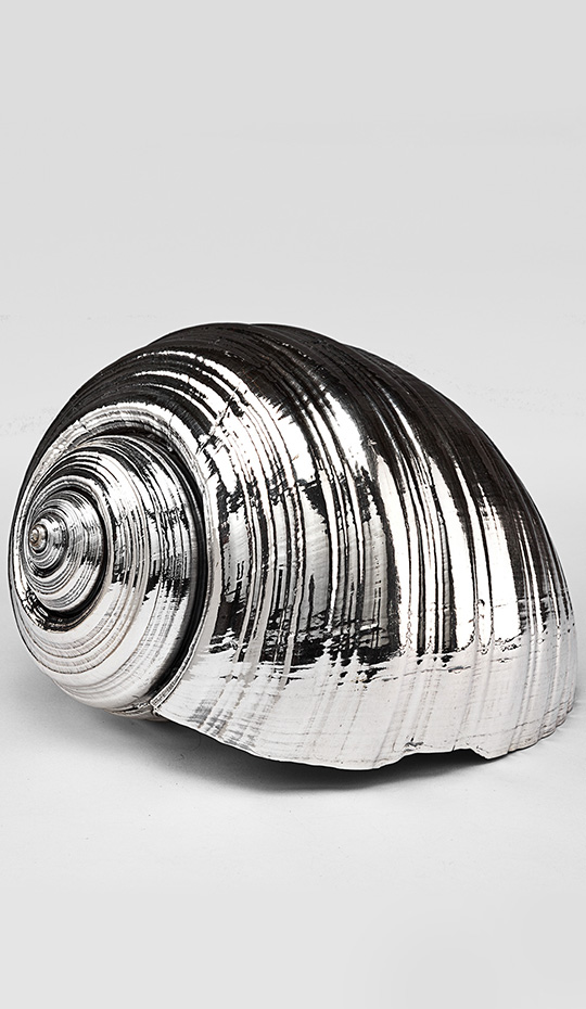 Silvered Tonna Shell