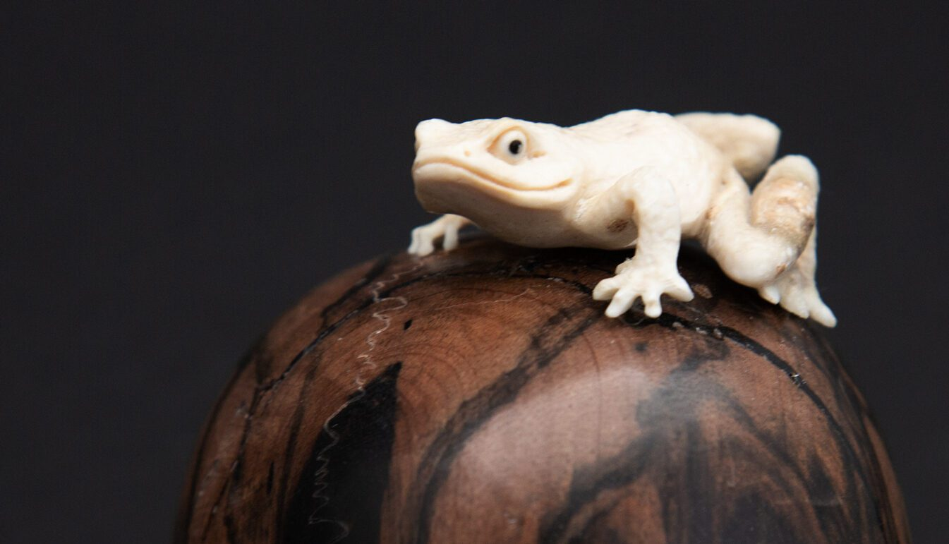 Zoom on a white frog on skull head