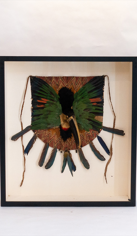 Toucan Breastplate, Jivaroan