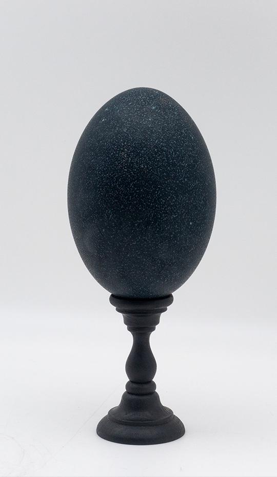 Mounted Emu Egg, Small