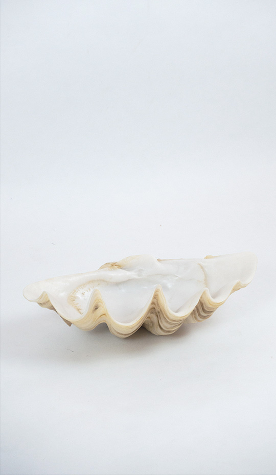 Giant Resin Clam Shell