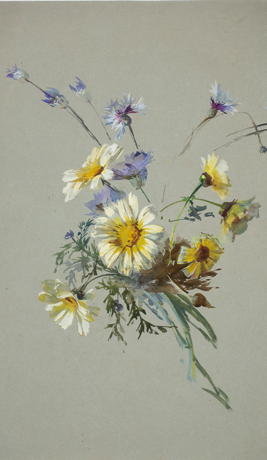 Wildflower Study, Aquarelle and Gouache, 19th Century