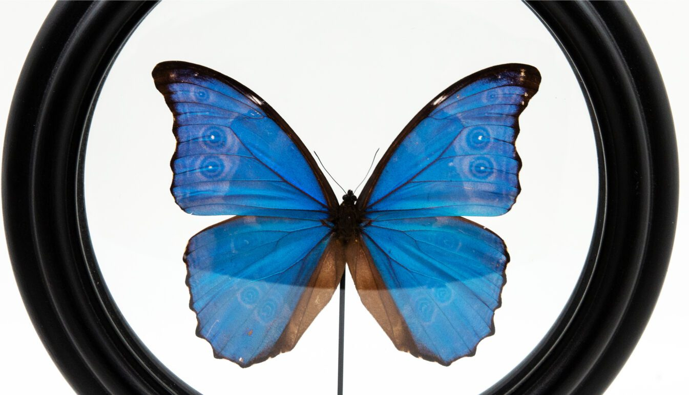 Zoom on Blue Butterfly in Round Reliquary