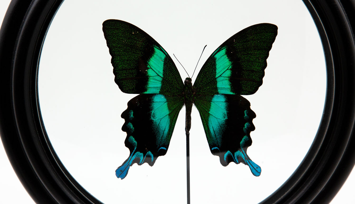 Zoom on Green Butterfly in Round Reliquary mounted in France