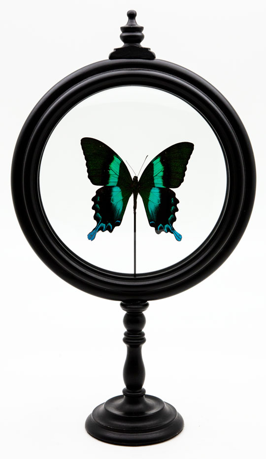 Green Butterfly in Round Reliquary