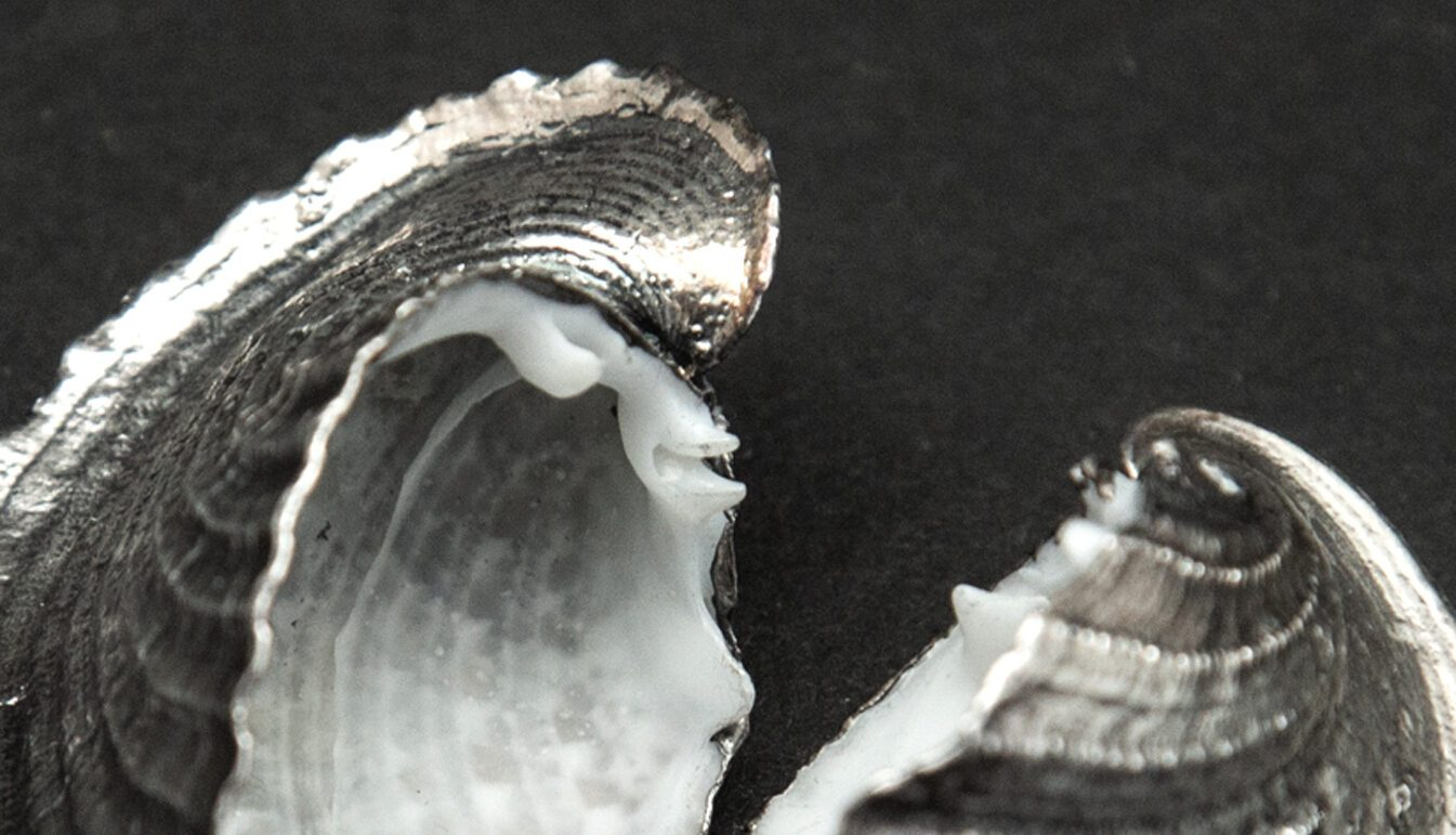Heart cockle fully silvered - Zoomed image