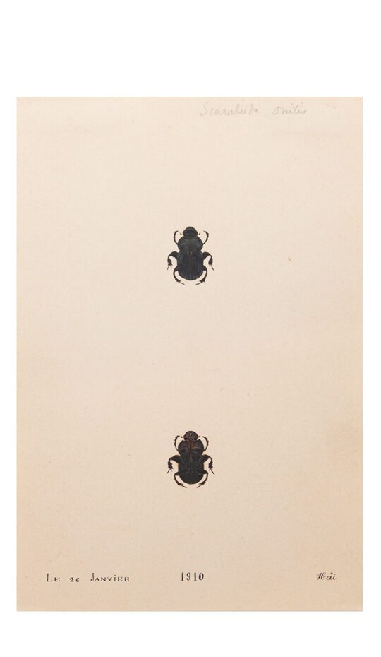 Two Black Painted Beetles one above the other on cream antiqued paper.