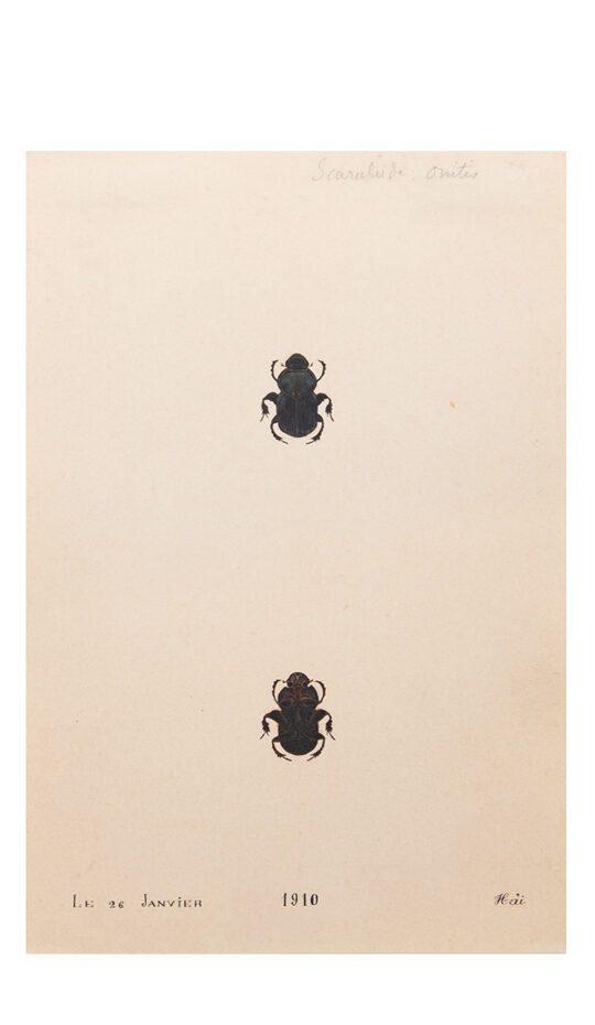 20th C. Painting of Black Scarab Beetle
