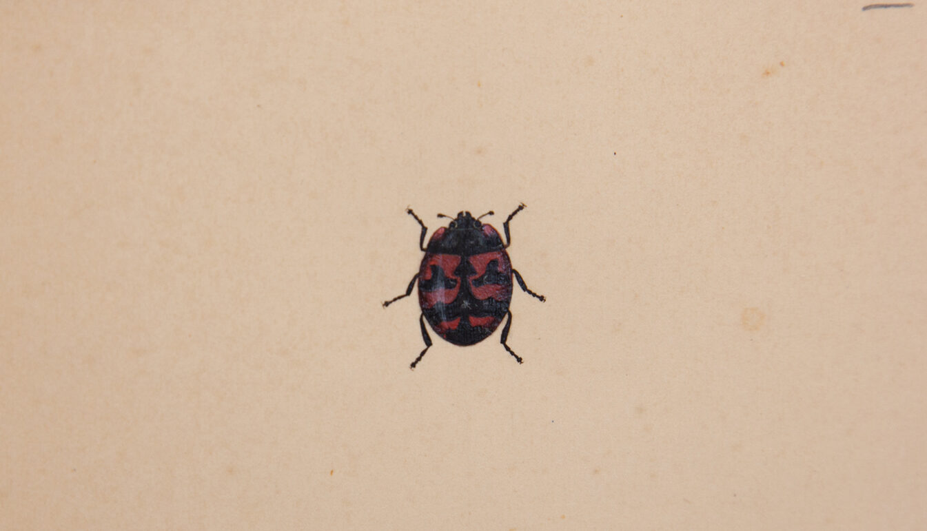 Three Ladybird beetles in a vertical line with black and red on cream antiqued paper