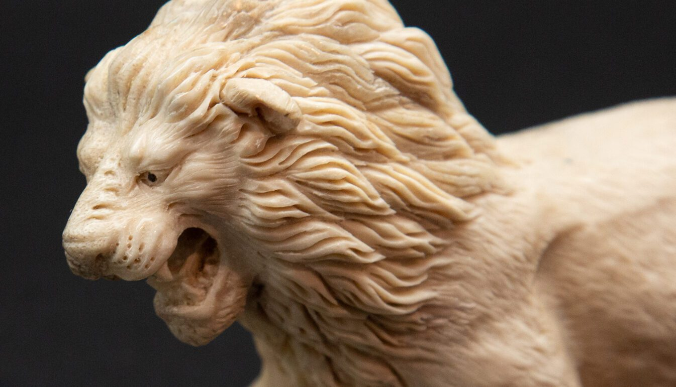 closeup of a Lion With mouth open carved from white moose antler on black background